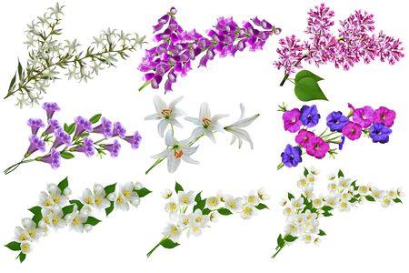 petunias: flowers isolated on white background Stock Photo