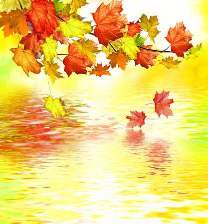 feuillage: autumn foliage