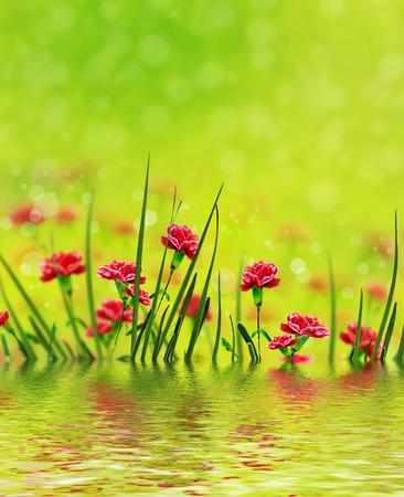 flowers sun: bouquet of flowers carnation