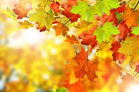 Autumn foliage. Golden Autumn. Photo. Standard-Bild