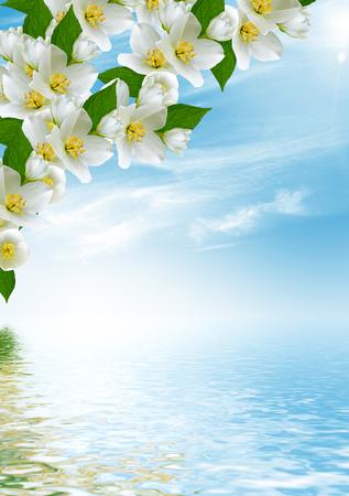 jardines con flores: rama de flores de jazmín sobre un fondo de cielo azul con nubes