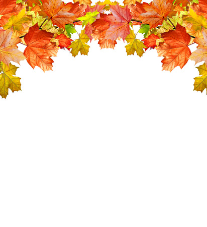 autumn color: autumn leaves isolated on white background