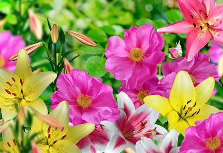 Landscape, flower rosehip. lily Stock Photo