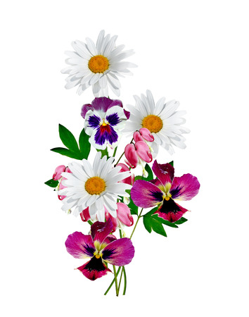 daisy stem: daisies summer white flower isolated on white background Stock Photo