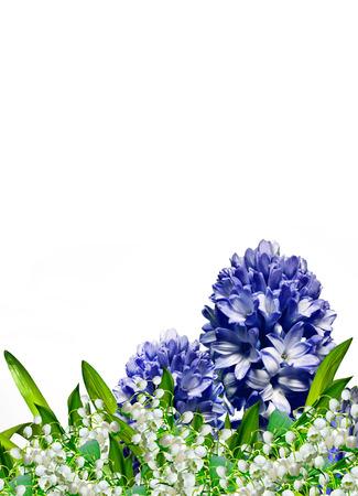 hyacinth: hyacinth flower Stock Photo