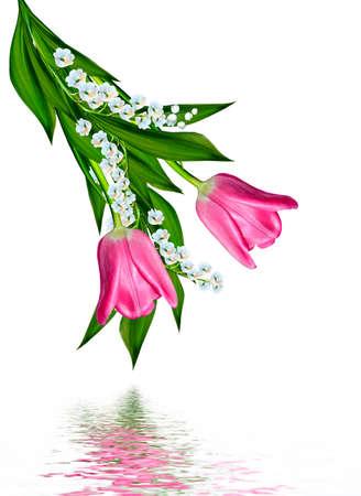 tulip: wiosenne kwiaty tulipany na białym tle