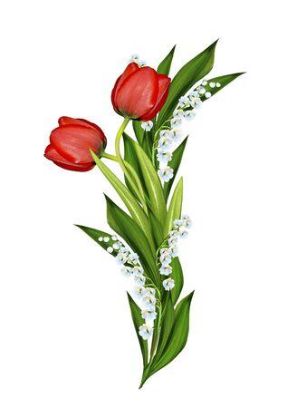 white tulip: spring flowers tulips isolated on white background