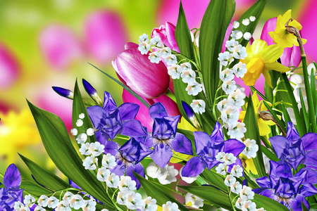 lily of the valley: Spring flowers tulips and lilies of the valley Stock Photo