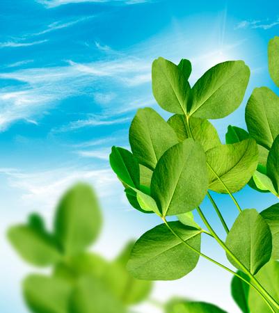 leafed: leaf clover