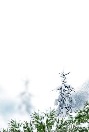 winter sky: Winter Forest. Winter landscape.