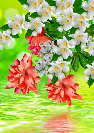 considerable: Floral background. Spring flowers.