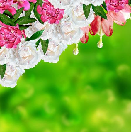 hemorragias: flor rosada del coraz�n sangrante. peon�a Foto de archivo
