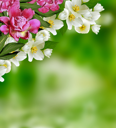 coloured background: Spring landscape with delicate jasmine flowers