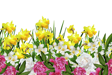peonies: yellow flowers daffodils. peonies Stock Photo