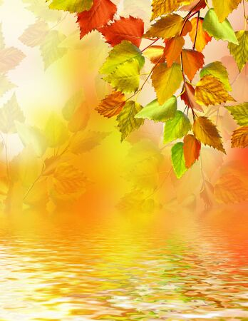 background summer: Autumn foliage. Golden Autumn. Photo. Stock Photo