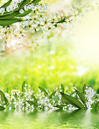lily of the valley: Summer. Background of flowers. lily of the valley