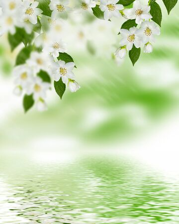 flower of life: Spring landscape with delicate jasmine flowers