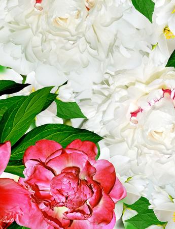 considerable: Spring flowers peonies and jasmine