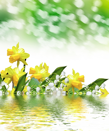 lily of the valley. narcissus