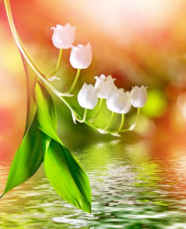 flor de lis: paisaje de primavera. flores lirio de los valles