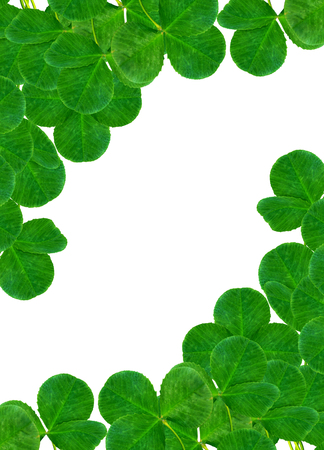 four leafed clover: leaf clover on white background Stock Photo