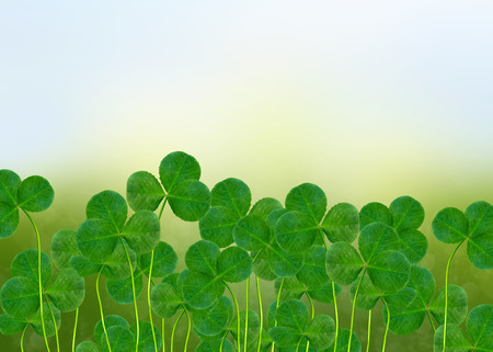 four leafed clover: Summer landscape. Meadow. Clover. Stock Photo