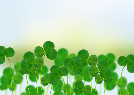 leafed: Summer landscape. Meadow. Clover. Stock Photo
