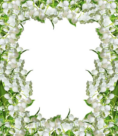 lily of the valley: The branch of lilies of the valley flowers isolated on white background