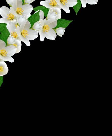 path to romance: jasmine white flower isolated on black background