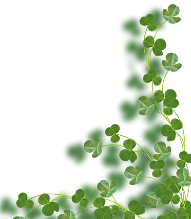 button grass: leaf clover on white background. Green foliage