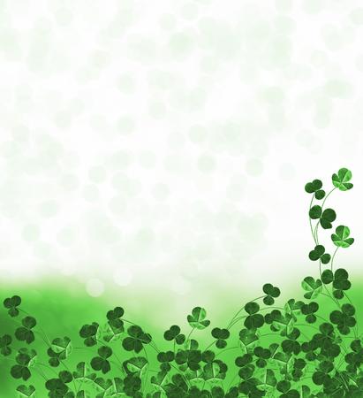 leafed: Green clover leaves on a background summer landscape. trefoil