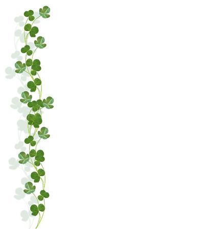leafed: leaf clover on white background. Green foliage