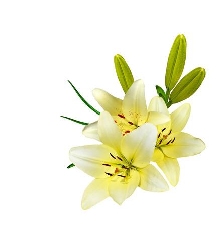 花ユリは、白い背景で隔離。繊細な花 写真素材