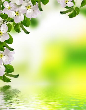 blooming apple tree. Spring landscape with blooming flowers Zdjęcie Seryjne