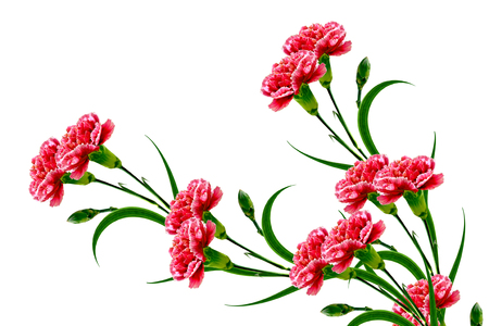 Bouquet of flowers carnation. Flowers isolated on white background.