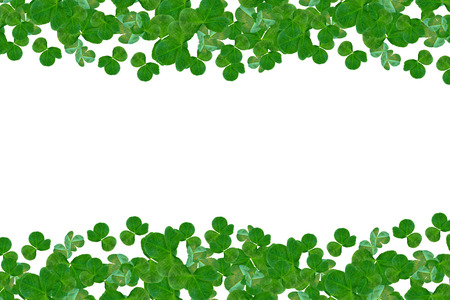 s day: Green clover leaves on a background summer landscape. St.Patrick s Day