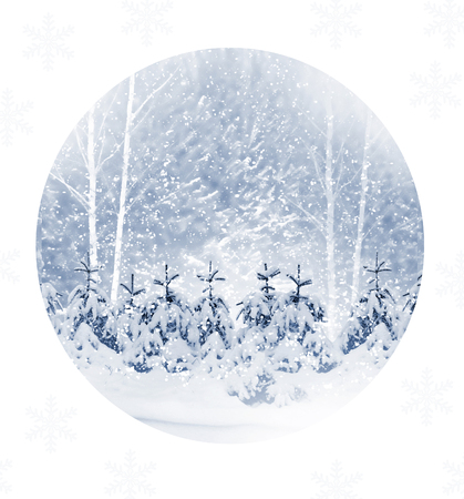 Winter Forest. Winter landscape. Snow covered trees.