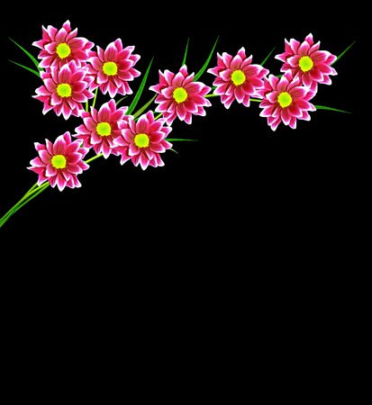 path to romance: Bouquet of flowers chrysanthemum Flowers isolated on black background.