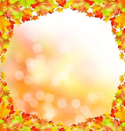 indian summer: Autumn foliage. Golden Autumn. Photo.  Indian summer