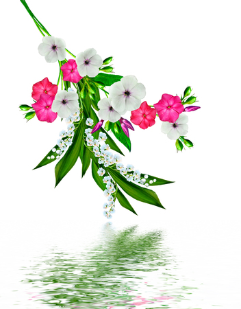 cadre: flowers lily of the valley. Flowers of lilies of the valley isolated on white background.