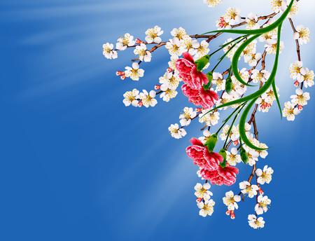 red  carnation: spring landscape. Flowering apricot. Spring flowering garden. red carnation Stock Photo