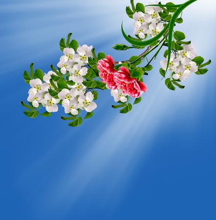 red  carnation: spring landscape. Flowering pear. Spring flowering garden. red carnation