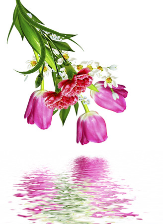 red  carnation: spring flowers tulips isolated on white background. snowdrop. red carnation