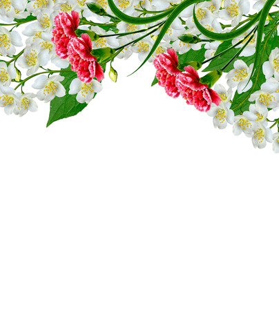 red  carnation: White jasmine flower. The branch delicate spring flowers. branch of jasmine flowers isolated on white background. spring flowers. red carnation
