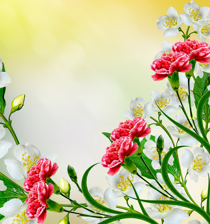 red  carnation: White jasmine flower. The branch delicate spring flowers. red carnation