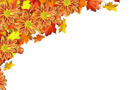 golden daisy: abstract background of autumn leaves. Autumn leaves isolated on white background Stock Photo