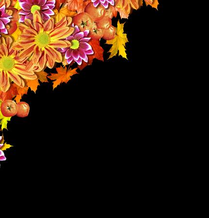 golden daisy: abstract background of autumn leaves. Autumn leaves isolated on black background Stock Photo