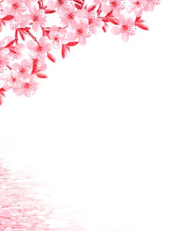 arboles frutales: ramas de árboles frutales aislados en el fondo blanco Foto de archivo