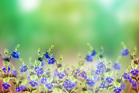 subtlety: floral background