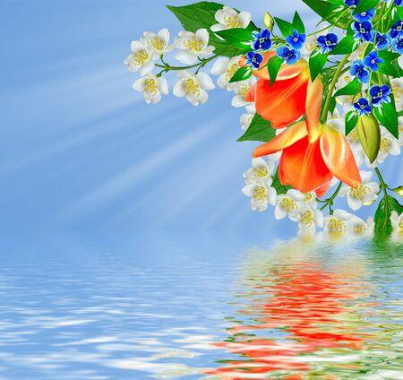fiore di gelsomino bianco. Il ramo delicati fiori primaverili. tulipano rosso